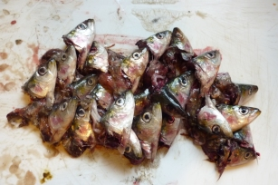 têtes de poissons